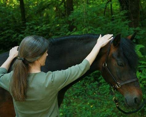scared horses help