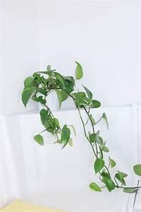 Pflanzen Für Drinnen : die besten zimmerpflanzen f r die wohnung flowers plants pinterest ~ Frokenaadalensverden.com Haus und Dekorationen