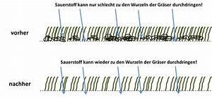 Wann Rasen Mähen : rasen vertikutieren richtig gemacht schritt f r schritt erkl rt ~ Watch28wear.com Haus und Dekorationen