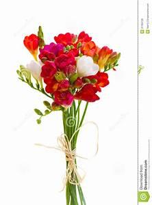 Bouquet De Fleurs : petit bouquet des fleurs rouges de freesia photos libres de droits image 31183728 ~ Teatrodelosmanantiales.com Idées de Décoration