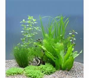 Pflanzen Für Aquarium : planet plants 60er set topf bund aquarium pflanzen dehner garten center ~ Buech-reservation.com Haus und Dekorationen