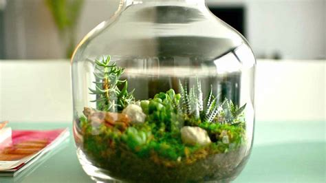 ecosystem in bottle only watered once in 50 years
