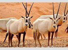 قائمة حيوانات مهددة بالانقراض في السعودية