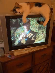 tv for cats cat 171 window on the prairie