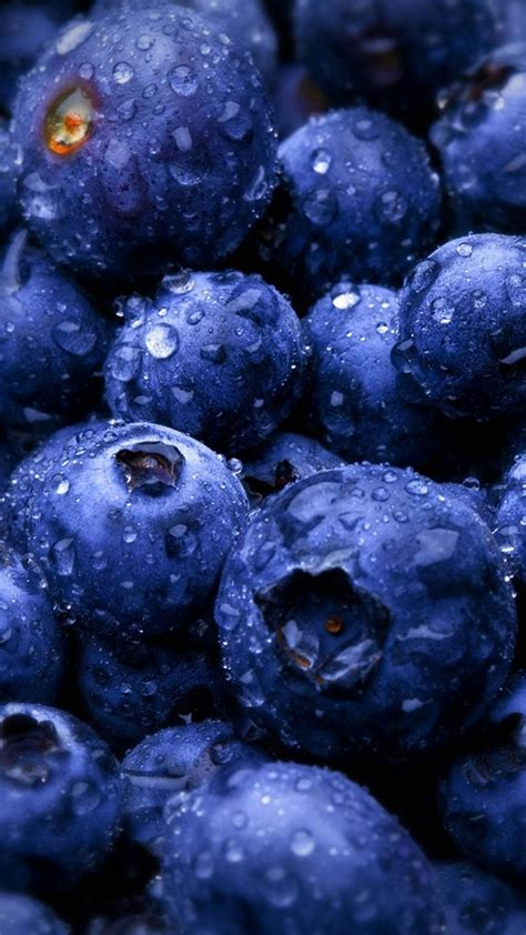 hd blueberries fruit water drops android wallpaper