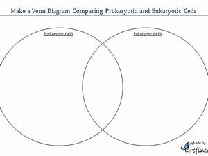 30 Eukaryotic And Prokaryotic Venn Diagram