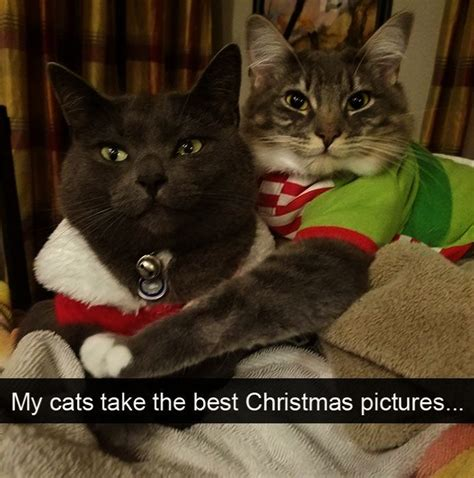 Cat Sitting Meme - 10 hilarious cat snapchats that are im paw sible not to laugh at kitties pinterest