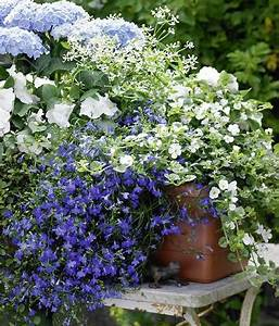 zum nachpflanzen balkonkasten mit hortensien und lobelie With französischer balkon mit pflanzen für bienen im garten