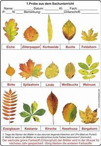 Blätter Basteln Herbst : bl tter im herbst herbst pinterest ~ Lizthompson.info Haus und Dekorationen