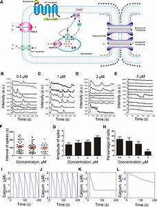 Computational Modeling Of Calcium Signaling   A  Histamine