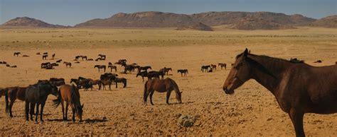 horse namib desert horses wild africa namibia feral found memoires voyage hold