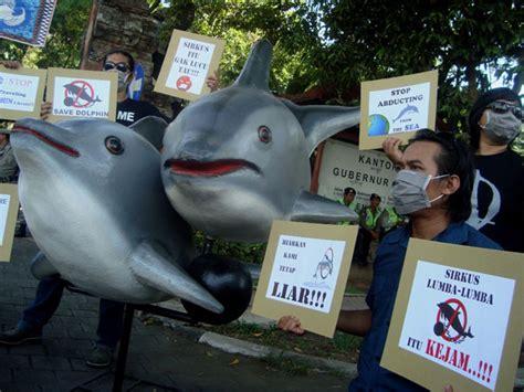 marak penyiksaan lumba lumba berkedok wisata konservasi