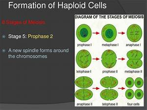 Meiosis And Reproduction