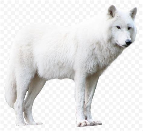 library  arctic wolves png black  white library png files clipart art