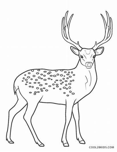 Deer Coloring Realistic Colorear Dibujos Cool2bkids Printable