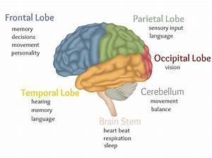 Brain Health  U2013 Instride Online