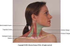 Muscles On Side of Neck