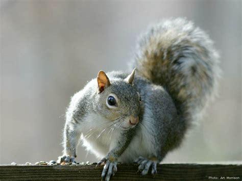 squirrel wild life animal