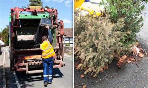 boroondara council collection for christmas trees council still hasn t collected residents trees after 47 days uk news express co uk
