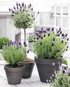 Plantes Grimpantes Pot Pour Terrasse : plante ext rieur en pot en 35 id es d co ~ Premium-room.com Idées de Décoration