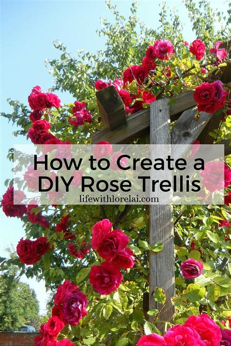 How To Create A Diy Rose Trellis  Life With Lorelai