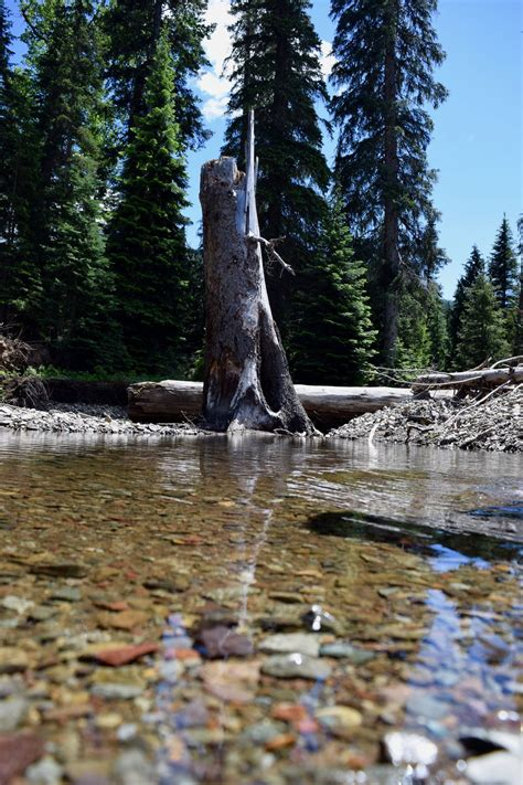 Broken Tree Over Frigid Waters. | Smithsonian Photo ...
