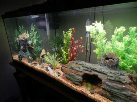 la meilleure cuisine l 39 aquarium meuble dans la déco archzine fr