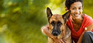 pet sitters international 1 source for professional pet With the dog sitter