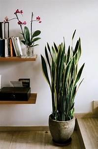 Plante D Intérieur : savourez la beaut de la plante d int rieur dans notre ~ Dode.kayakingforconservation.com Idées de Décoration
