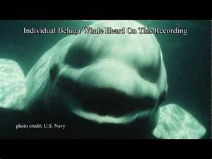 Researchers Find a Whale Trying to Speak Human