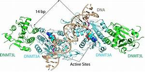 Scientists Crack Structure Of Enzyme Complex Linked To Cancer
