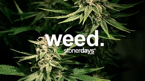 stoner dictionary  stonerdays
