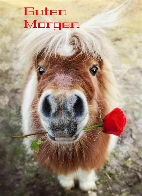 Die Besten 25+ Kuscheltier Pferd Ideen Auf Pinterest