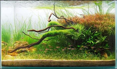 Award Winning Aquascapes by Underwater Gardens Award Winning Planted Aquariums La Times