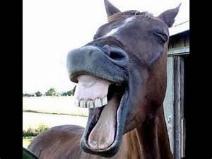 The World's Most Funny Horse Videos 2013 | MakeMeLaughs.com