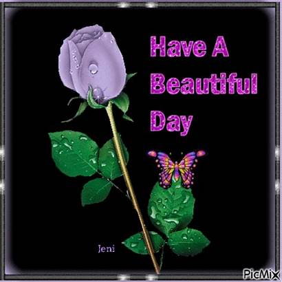 Rose Single Lavender Morning Poems Rainbow Purple