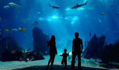 new aquarium boston family with fish