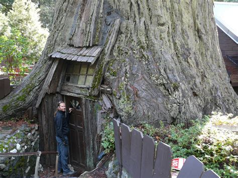 tree house hotel redwood forest redwood forest tree house leer diarios de viaje en www elm flickr