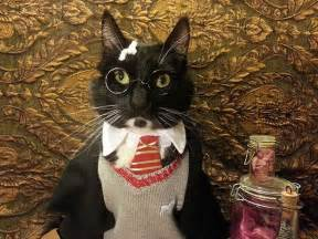 harry potter cat 13 harry potter costume ideas to make your