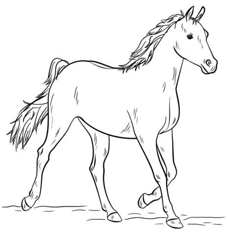 disegno  cavallo arabo grigio da colorare disegni da