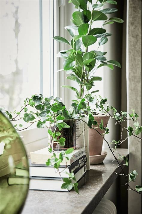 Window Potted Plants by Best 25 Window Plants Ideas On Minimal