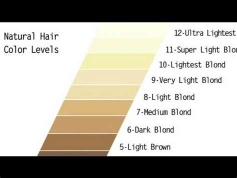 level  dye developer  add blonde highlights