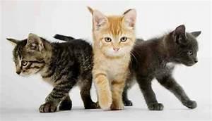 Welcher Junge Passt Zu Mir : warrior cats welcher b sewicht passt zu mir ~ Heinz-duthel.com Haus und Dekorationen