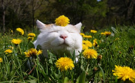 Image result for spring pictures of cats