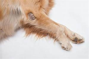 Best Home Remedies for Mange In Dogs: Causes And Treatment