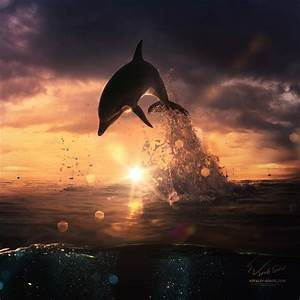Beautiful-sunset-dolphin-jumping-from-ocean by Vitaly ...