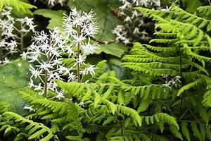 Pflanzen Für Trockene Schattige Standorte : stauden f r schattige pl tze im garten ~ Michelbontemps.com Haus und Dekorationen