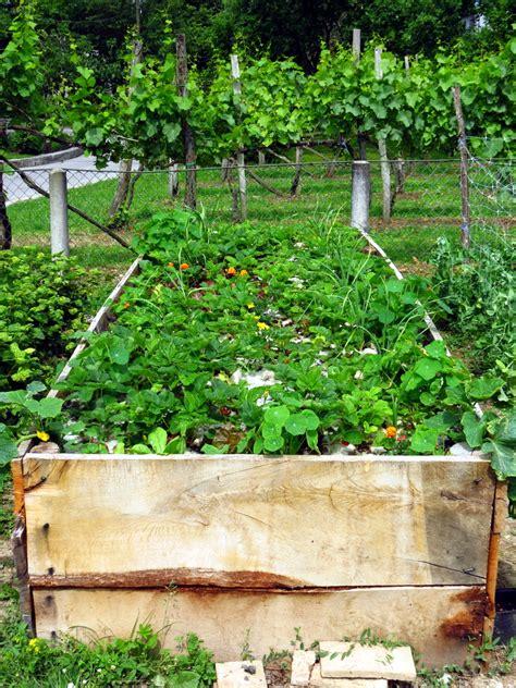 Bepflanzen Eines Hochbeetes by Hochbeet Bepflanzen 187 Obst Gem 252 Se Blumen Und Mehr