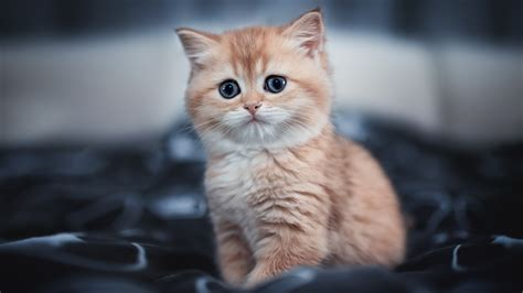 Live wallpapers are the animated and dynamically interactive back grounds or wallpapers for your mobile device's home screen. 1920x1080 Cute Kitten 4k Laptop Full HD 1080P HD 4k Wallpapers, Images, Backgrounds, Photos and ...