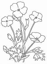 Poppy Colorear Petalos Kolorowanki Pintarcolorir Bestcoloringpagesforkids Decoloring Kidscoloring sketch template